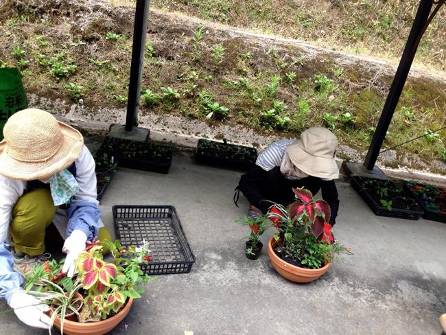 園芸講座-寄せ植え実習中
