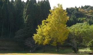 たからべ森の学校の秋