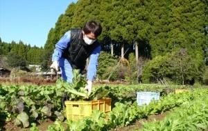 収穫した野菜を使ったレシピ作り