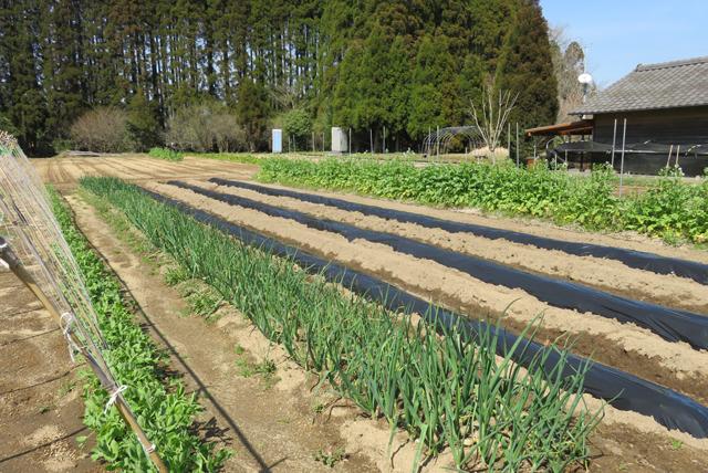 東松山市議会の皆様視察時の学校農園