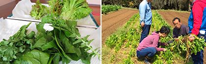 たからべ森の学校「学校農園」で野菜の収穫