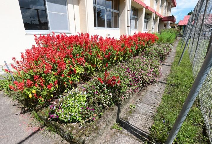 たからべ森の学校花壇
