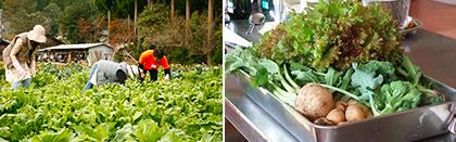 昼食・学校農園での野菜収穫体験