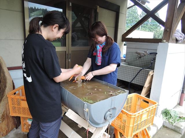 訓練生が収穫した野菜を丁寧に洗っています。