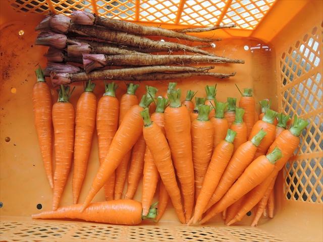 綺麗に洗われた野菜たち