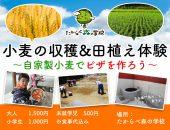 小麦の収穫&田植え体験 ~自家製小麦でピザを作ろう~